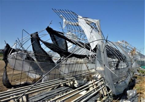 パイプハウスの被害の様子